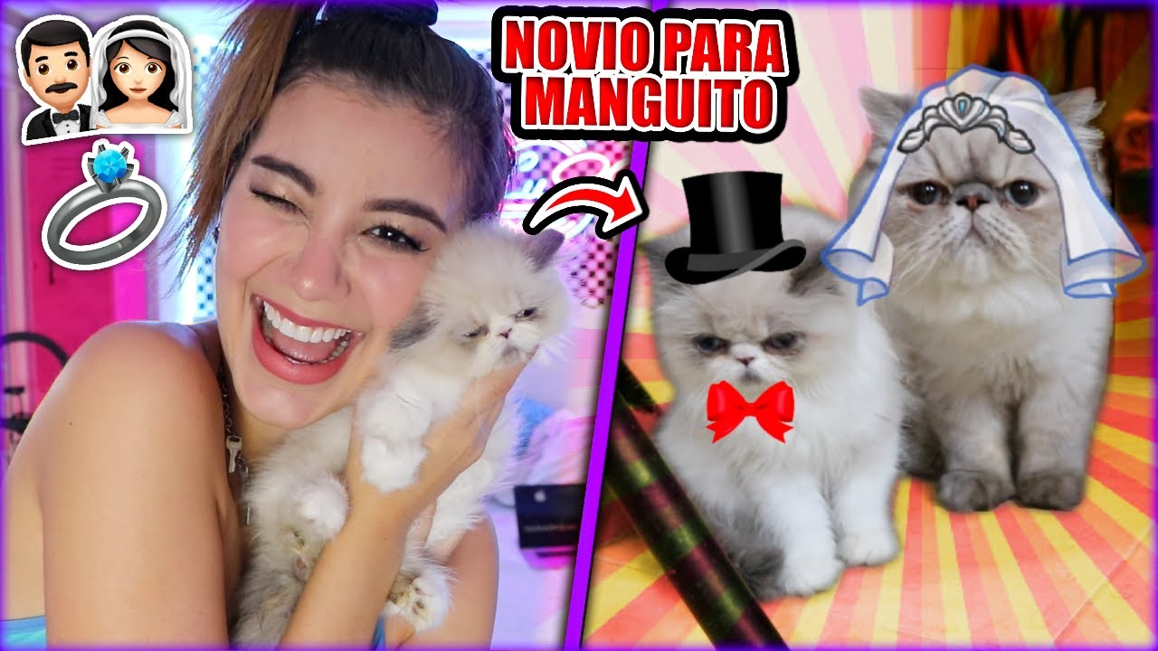 MI NUEVO GATITO 😻 NOVIO PARA MANGUITO!! - Lulu99