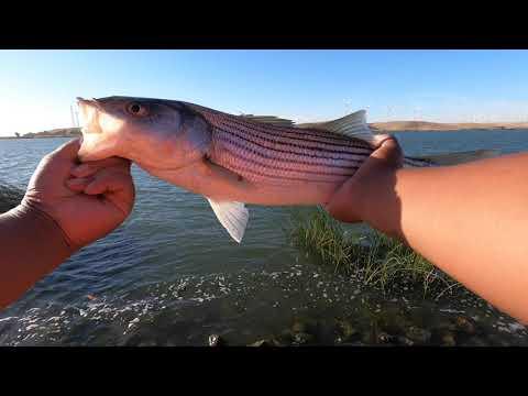 Sacramento River Striper Fishing
