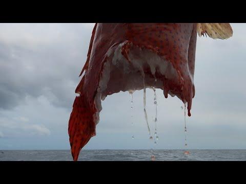 Quand Le REQUIN Te Dit NON ! Pêche Extrême à Madagascar.