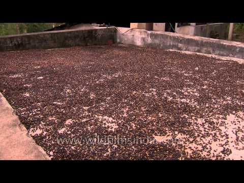 Difference Between Arabica and Robusta from YouTube · Duration:  1 minutes 24 seconds