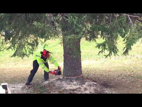 State Of Michigan Christmas Tree Harvesting