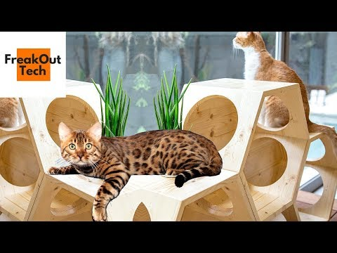 5 Incredible Gifts Your Cat Will Love