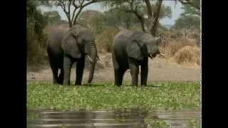 Ein Paradies für Tiere: Afrikas wildes Herz - The Great Rift