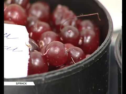 Сушилка для фруктов , овощей, ягод, грибов  и др.  Дачник-4