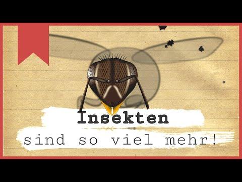 Insekten sind so viel mehr - Insecticon