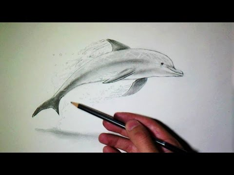 Comment Dessiner Un Dauphin Tutoriel Youtube