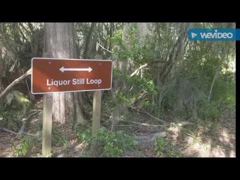 Big Ferry Trail Hike, Savannah, GA