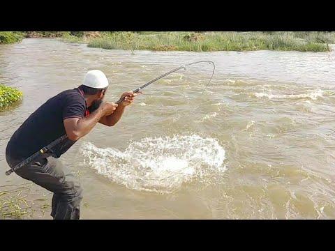 🐋incredibleBig Cat Fish Catching||Baam Fish Hunting|Big Cat Fishing||indian Eel Fishing|Baam Fishing