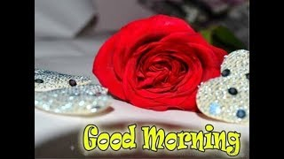 GOOD MORNING VIDEO,Whatsaap Wishes,SMS,greetings,Beautiful Quotes,Status,Lovely Message 12