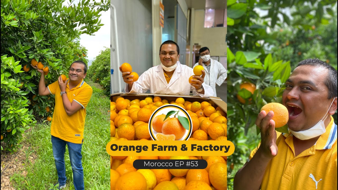 EP #53 - Orange Farm & Factory in Morocco, A Trip to Beni-Mellal to experience Oranges
