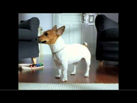 Ikea cute little dog commercial