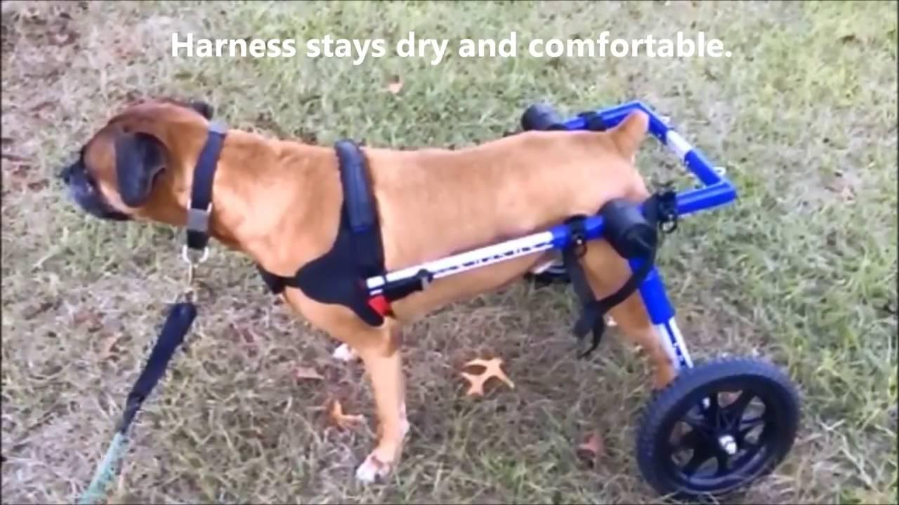 La silla de ruedas para perros walking wheels permite que for Sillas para perros