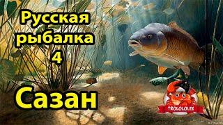 Русская рыбалка 4 Сазан на Ахтубе