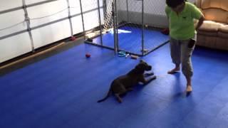Dog Training Off Switch Game