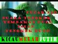 Cucak Ijo Suara Tengkek Isian Tengkek Buto Untuk Masteran Cucak Ijo  Mp3 - Mp4 Download