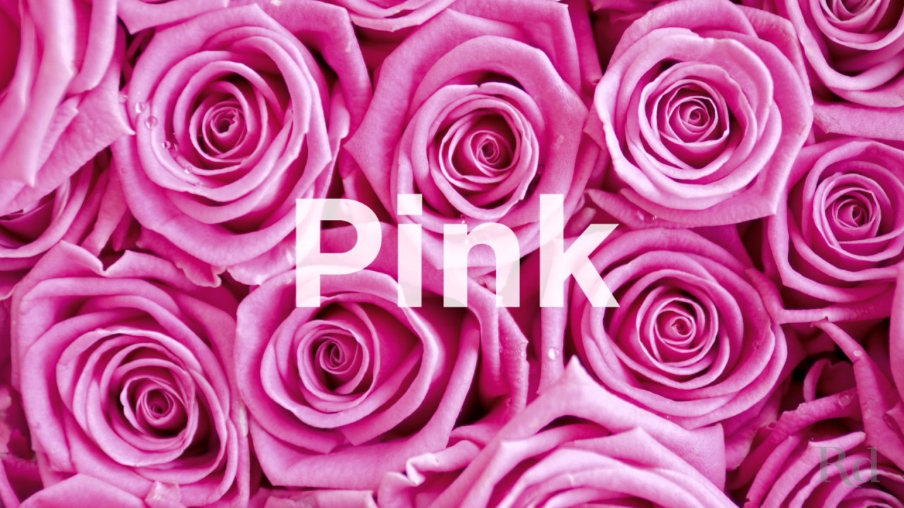 Rose color meanings youtube rose color meanings mightylinksfo