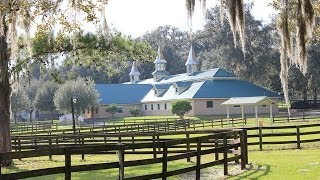 SOLD - 225A Farm 127 Acres - Ocala Florida