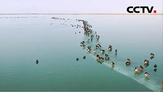 新疆巴州:万只候鸟栖息塔里木水库 |《中国新闻》CCTV中文国际 - YouTube