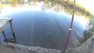 Рыбалка донными снастями на Суре!