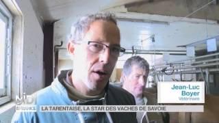 ANIMAUX : À Lanslebourg-Mont-Cenis, la vedette c'est Bella
