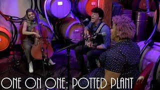 Cellar Sessions: Bandits On The Run - Potted Plant June 4th, 2019 City Winery New York