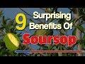 9 Surprising Benefits Of Soursop