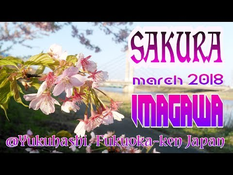 Hobby Travelling : Sakura @Imagawa Yukuhashi Fukuoka Japan March 2018