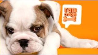 5 серия гав стори собаки из приютов