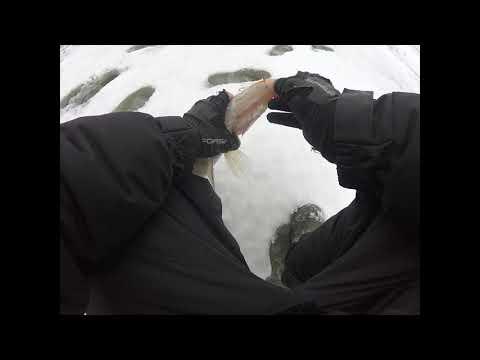 Кама первый лед 2020.Рыбалка на судака