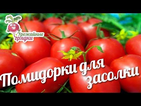 Отзывы о сортах помидор: Сабелька и Варвара #urozhainye_gryadki