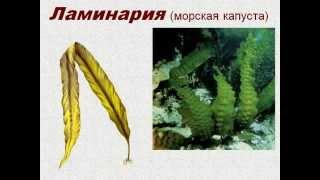 Водоросли 2.AVI
