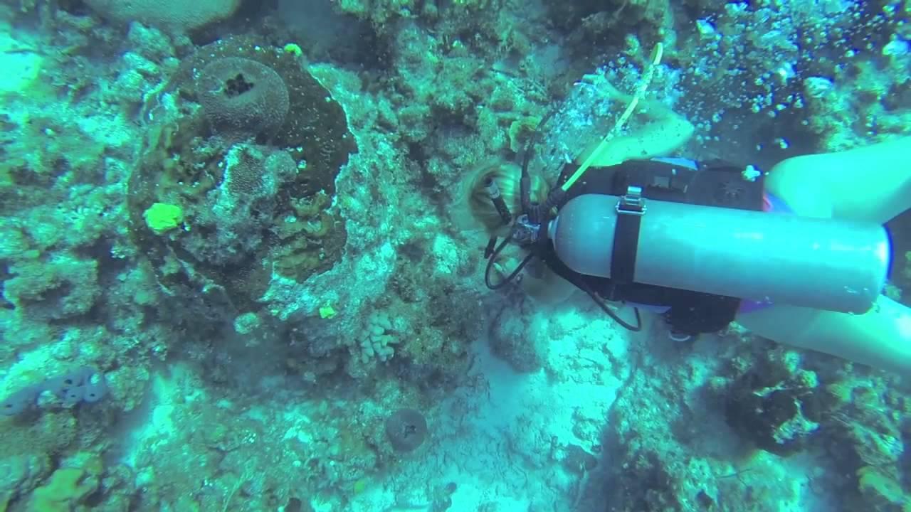 Scuba Diving Monterey