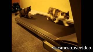 Смешные Кошки: Подборка Приколов С Кошками (часть 3)