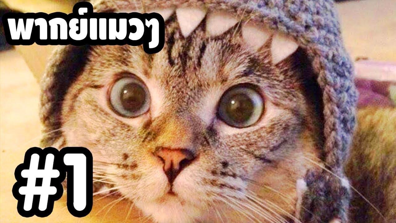 พากย์แมวๆ เดอะ ซีรี่ย์ - Season 1 Ep.1「นายหัวฟ้า」ตลกฮาเกรียน