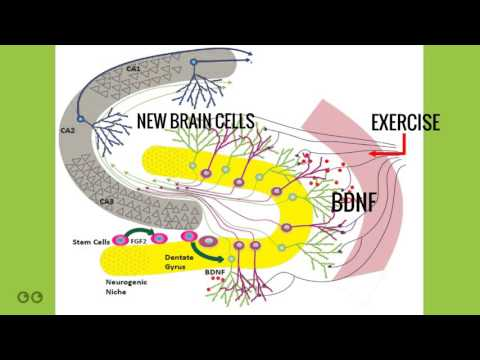 Aerobic Exercise for New Brain Cells and Cognitive Performance