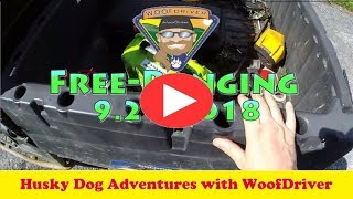 Dog Videos | FreeRanging with the WooFDriver | Husky Dog Adventure
