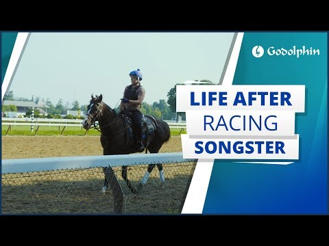 Graded Stakes winner Songster returns to the racetrack as a track pony | Life After Racing