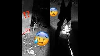 أخذت معي كلب على مكان مهجور !! حصلت صراخ شخص وهرب 😱🔞