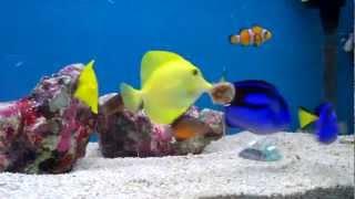 Красивые рыбки в аквариуме(http://okun.com.ua Интернет-магазин аквариумистики okun.com.ua - это магазин для любителей аквариумных рыбок, а также..., 2012-03-18T19:46:14.000Z)