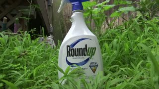 Monsanto ordered to pay $2bn to couple in new Roundup trial Subscribe to France 24 now: f24.my/youtubeEN FRANCE 24 live news stream: all the latest news 24/7 f24.my/YTliveEN This California couple has ...