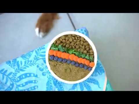 homemade-vegan-dog-food-recipe