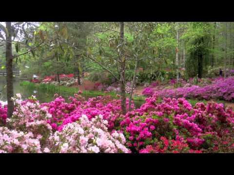 Azalea Time at Callaway Gardens