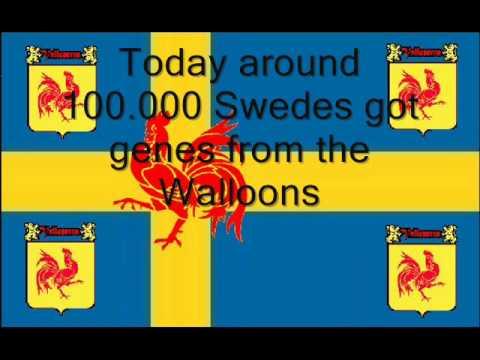 Swedish-Walloons