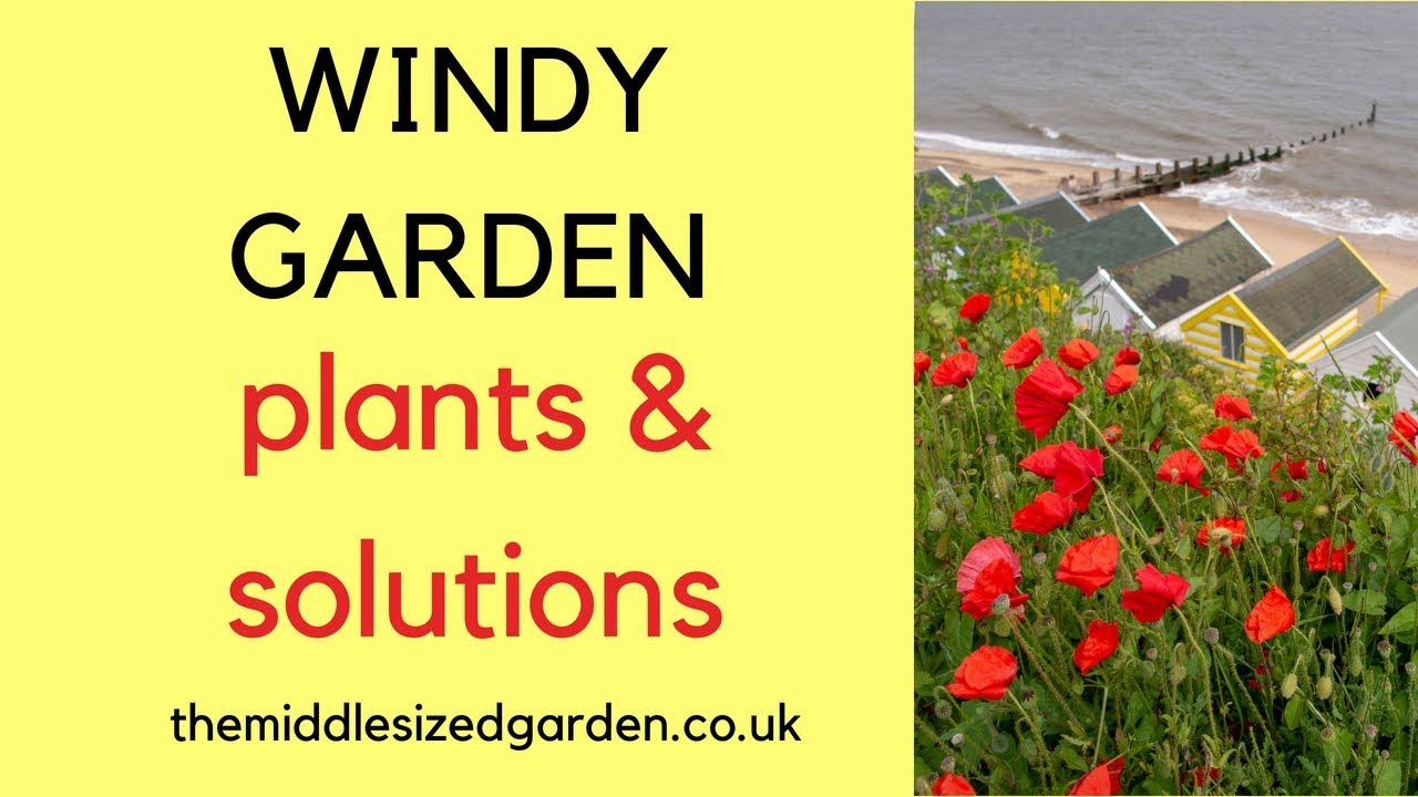windy garden plants and solutions