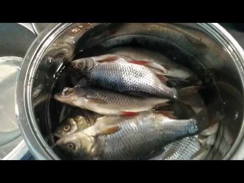 Таранка дома. Сушка рыбы на электро сушилке в домашних условиях. Как сделать таранку.