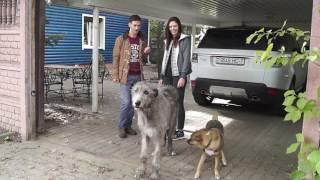 Отзыв Чуча и Элли. Дрессировка собак в Минске