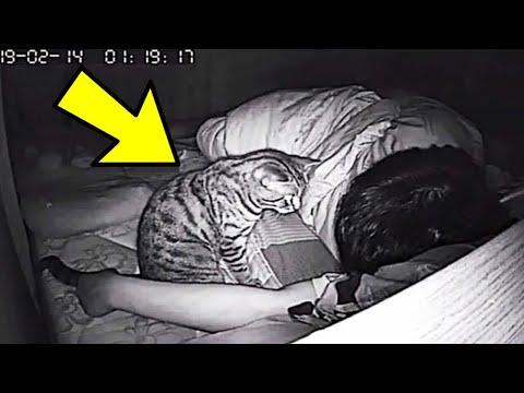 Il Gatto lo Fissa Tutta la Notte per Giorni. Il Padrone Compra una Videocamera e Scopre Perché