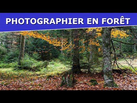 📸PHOTOGRAPHIER En FORÊT 🌲 Les Conseils De Paul-André COUMES Photographe Professionnel