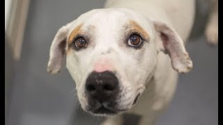 LIVE: Adoptable Dog in NYC Looking for Forever Home | The Dodo