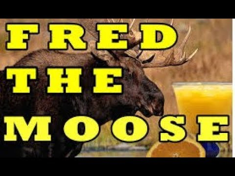 Silly Songs: The Great Big Moose